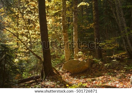This is sunny tree in Caucasus forest in autumn