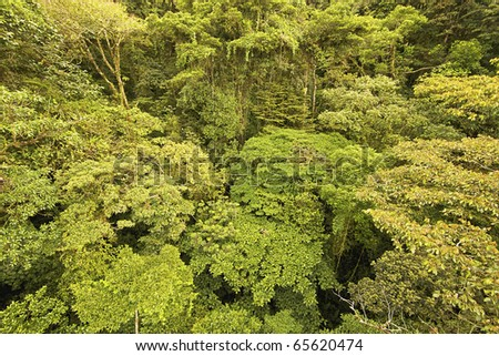 This is the endangered canopy of an original central american rain forest with very complex vegetation. - stock photo