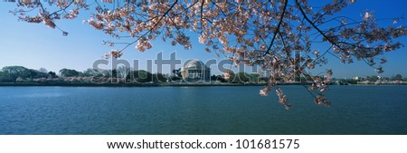 This is the Jefferson Memorial with cherry blossoms bordering the top of the frame. The Tidal Basin is in front of the memorial all against a blue sky. - stock photo