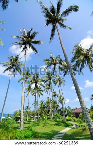 """This is Walk Way under coconut.This Place is The Shantaa Resort.Which is located on the island """"Kood"""" Trat, Thailand - stock photo"""