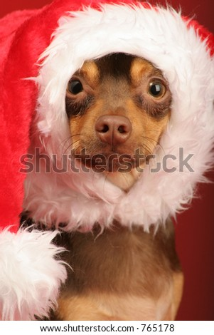 this little puppy is ready to help all decked out in his santa hat - stock photo