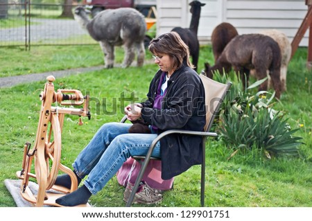 This middle aged country woman is sitting and spinning alpaca wool into yarn, with the alpacas in the background. - stock photo