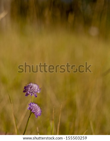 This photo shows a blurred background with some flowers on the foreground.