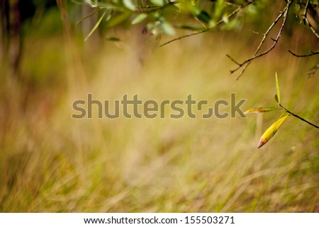 This photo shows a branch with leafs on a bokeh background.