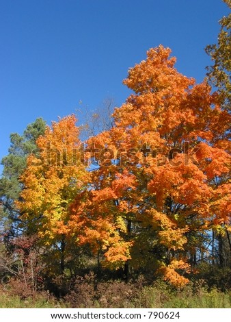 This photo was taken during peak colors in Michigan. Peak time was during the second weekend in October. - stock photo