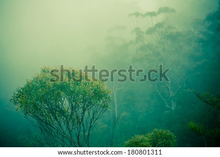 This picture taken in the eucalyptus forests. A eucalyptus tree and clouds done in a vintage style. - stock photo
