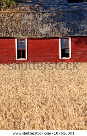 This red barn contrasts with the golden color of the wheat field in the foreground of this country scene - stock photo