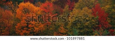 This shows the autumn colors on the foliage of the trees. - stock photo