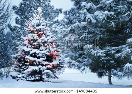 This Snow Covered Christmas Tree stands out brightly against the dark blue tones of this snow covered scene. - stock photo