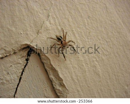 This spider was in my room - stock photo