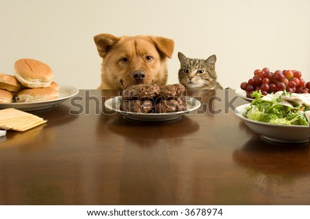 This time, we go on the count of one. (Dog and cat ready for the feast) - stock photo