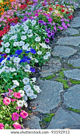 This vertical stock image is a cobblestone pathway with annual bedding flowers and plants next to it, for an intense splash of color, inviting someone to walk this pathway. - stock photo