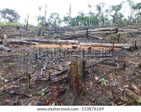 This was once a rainforest. Tropical forest destroyed by burning in the Amazon area of  Brazil. Image taken on 3 March 2013 - stock photo