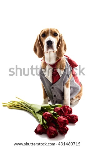 This wonderful bouquet is only for you - stock photo