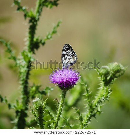 Thistle and Buterfly Over Natural Background