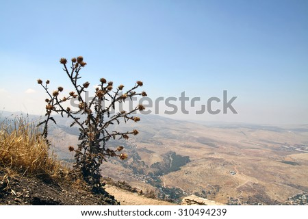 Thistle bush above the valley Tirza, located in the Syrian-African Rift below sea level - stock photo