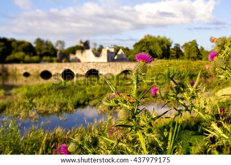 Thistle flower plant with historic Adare town bridge and Desmond Castle on the background in the County Limerick, Ireland  - stock photo