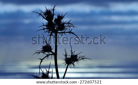 Thistle flowers at dawn on skyline with color effects - stock photo