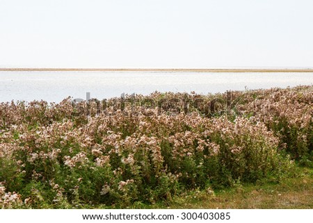 Thistle flowers at the shoreline - stock photo