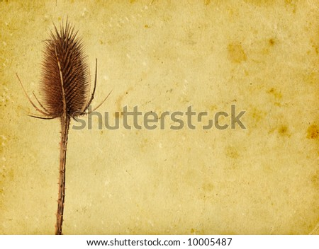 Thistle on vintage background