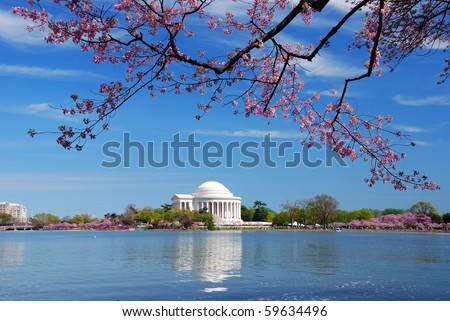 Thomas Jefferson national memorial with cherry blossom in Washington DC. - stock photo