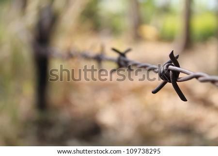 Thorn - stock photo