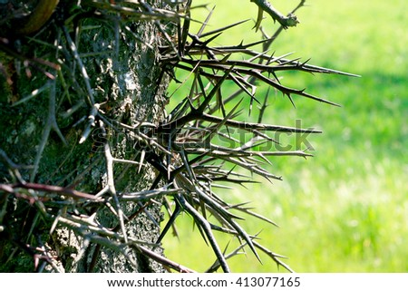 thorns on a tree - stock photo