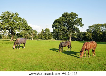 Thoroughbred Horses Grazing in a Green Field in Rural England - stock photo