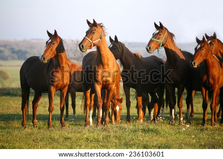 Thoroughbred Horses Grazing in a Green Field in Rural Pastureland - stock photo
