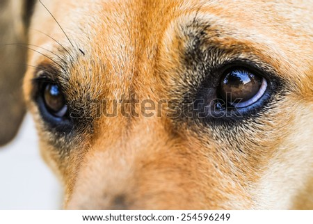 Thousands of dog ownership Thailand - stock photo
