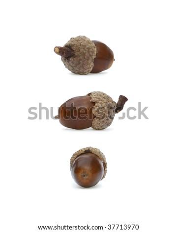 Three Acorns - stock photo