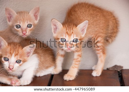 Three adorable kittens on wood floor and white background. - stock photo