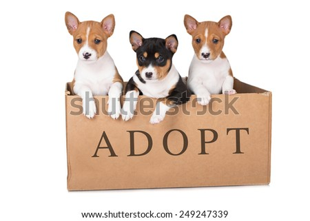 three adorable puppies in a box - stock photo