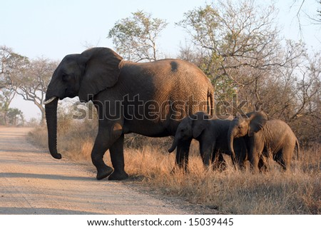 three african elephants crossing a road - stock photo