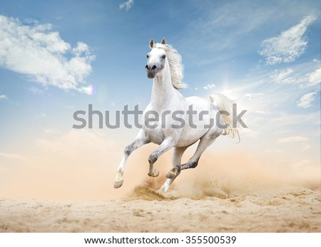 three arabian horses runs free in desert - stock photo