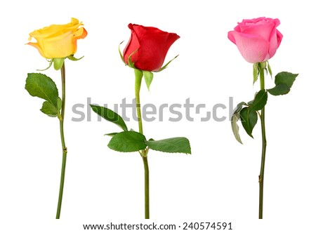 three assorted roses isolated on white
