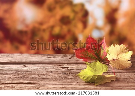 Three autumn leaves in red, yellow and green showing the colorful palette of the fall season lying on an old weathered wooden table against a background of coppery autumn foliage, with copyspace - stock photo