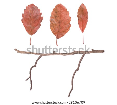 Three autumn leaves with twig below, shot on white background - stock photo