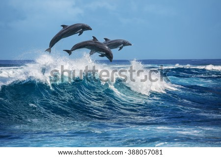 Three beautiful dolphins jumping over breaking waves. Hawaii Pacific Ocean wildlife scenery. Marine animals in natural habitat. - stock photo