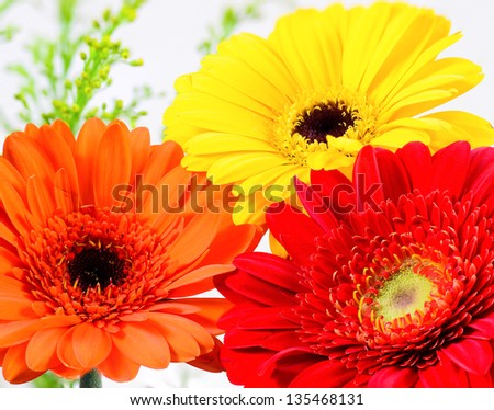 Three Beautiful Gerbera on a White Background, Yellow, Orange and Red