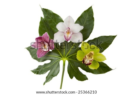 Three beautiful orchids (purple, white, green) on a large leaf, isolated on white, with clipping path - stock photo