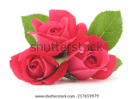 Three beautiful red roses on a white background - stock photo