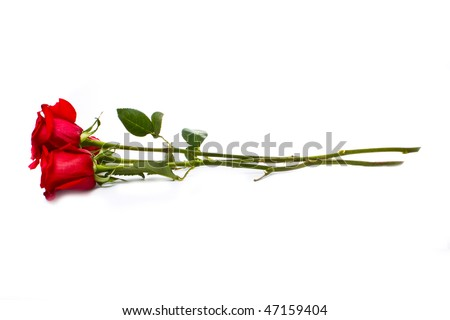 three beautiful roses isolated on white - stock photo