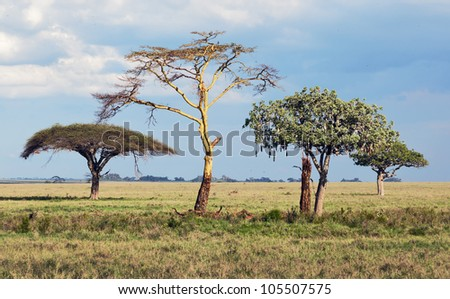 Three beautiful trees in Serengeti National Park - Tanzania - stock photo