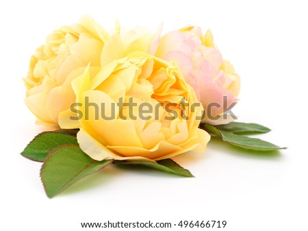 Three beautiful yellow roses on a white background.