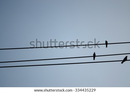 Three birds  on the wire with blue background. - stock photo