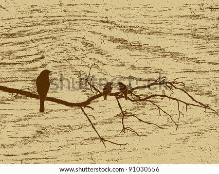 three birds on wood background - stock photo
