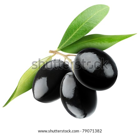 Three black olives on branch with leaves isolated on white - stock photo