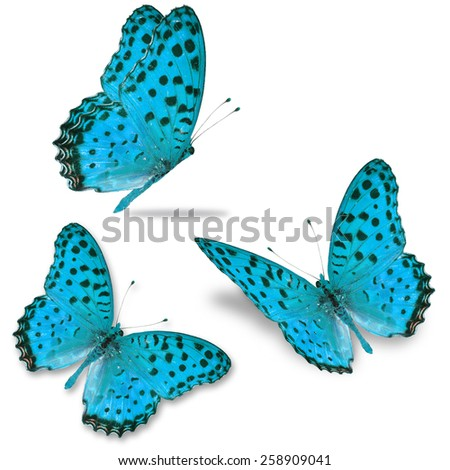 Three blue butterfly isolated on white background - stock photo