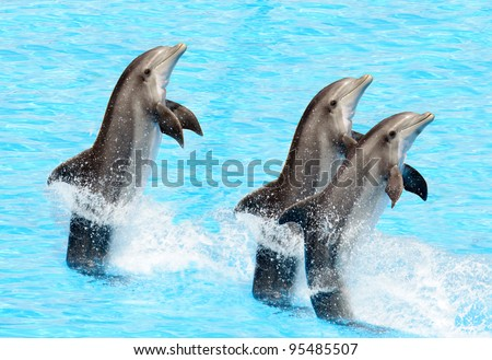 Three bottlenose dolphins performing a tail stand - stock photo